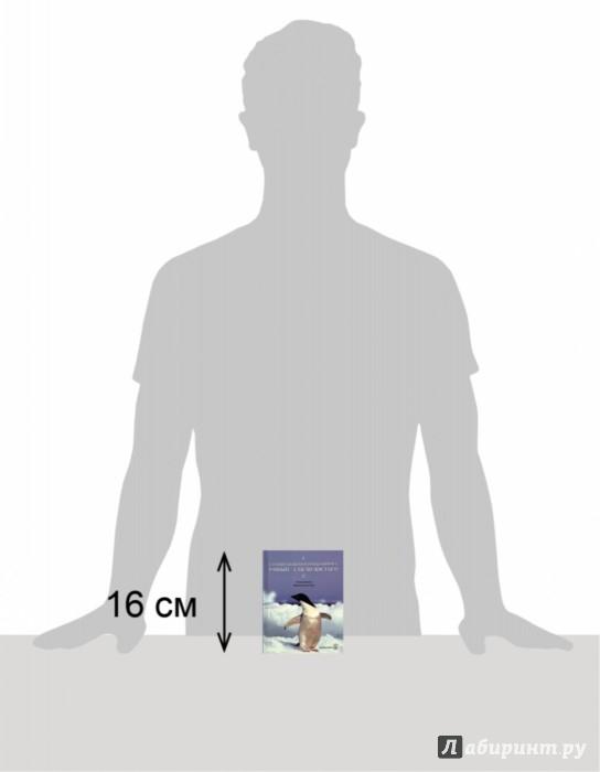 Иллюстрация 1 из 10 для Глупый пингвин робко прячет, умный смело достает! - Сан Хо | Лабиринт - книги. Источник: Лабиринт