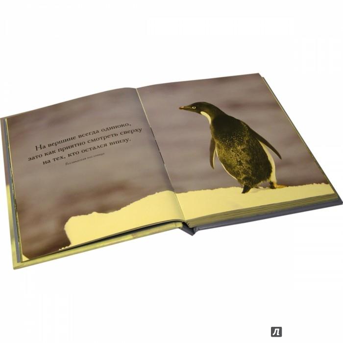 Иллюстрация 4 из 10 для Глупый пингвин робко прячет, умный смело достает! - Сан Хо | Лабиринт - книги. Источник: Лабиринт