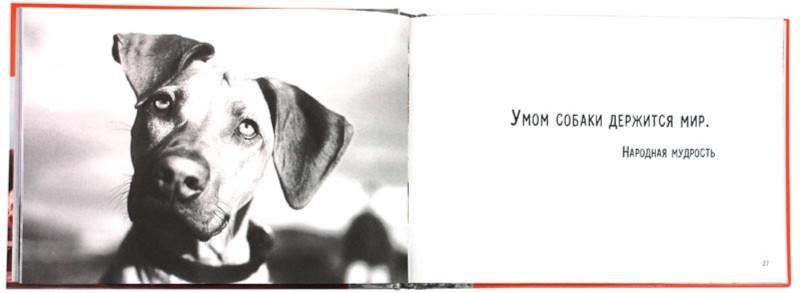 Иллюстрация 1 из 39 для Крутые дворняжки   Лабиринт - книги. Источник: Лабиринт