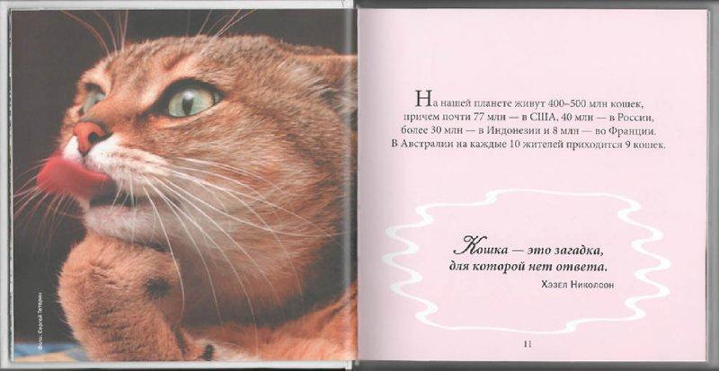 Иллюстрация 1 из 10 для Кот и пес. Лучшие фотографии | Лабиринт - книги. Источник: Лабиринт