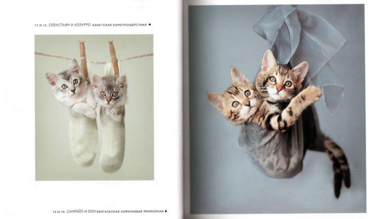Иллюстрация 1 из 6 для 101 котомодель. С любовью к кошкам - Рейчел Хэйл | Лабиринт - книги. Источник: Лабиринт