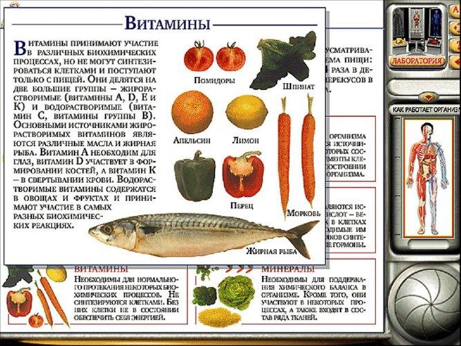 Иллюстрация 6 из 33 для Мое тело. Анатомия и физиология (CDpc) | Лабиринт - софт. Источник: Лабиринт