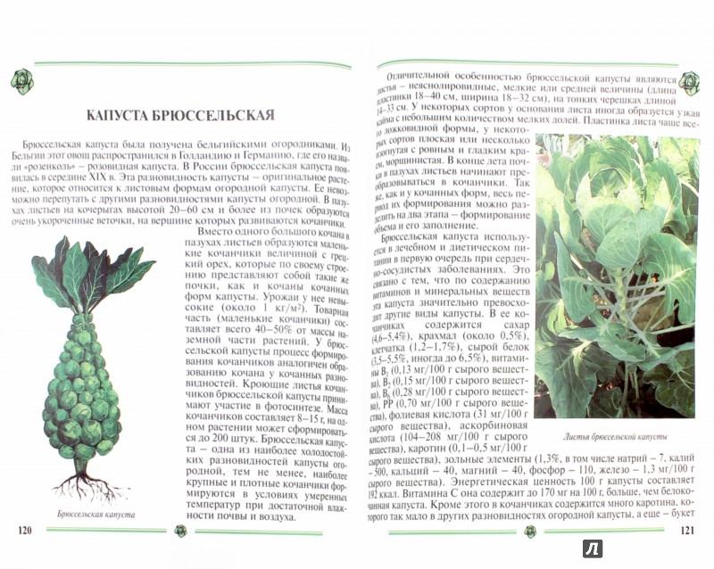 Иллюстрация 1 из 35 для Капуста. Пособие для садоводов-любителей - Пыльнева, Морозова   Лабиринт - книги. Источник: Лабиринт