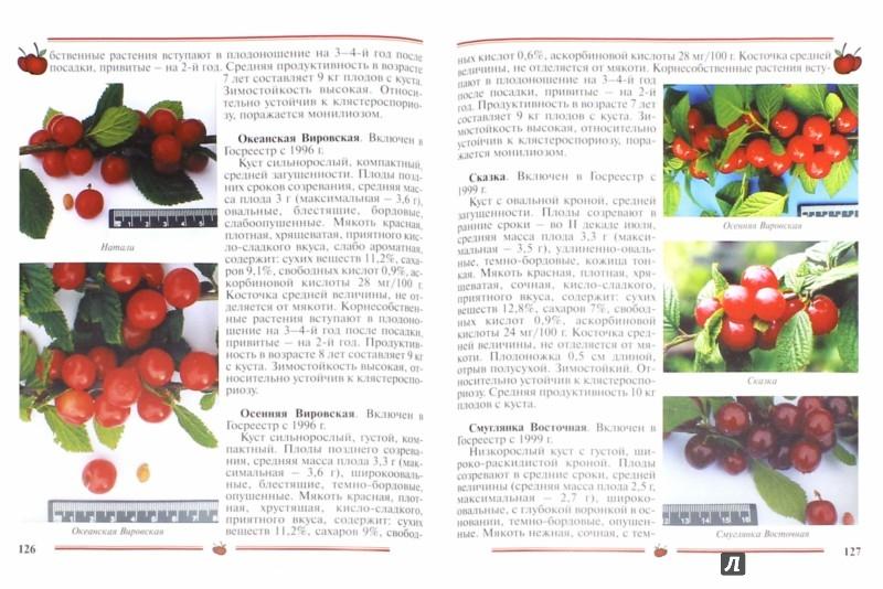 Иллюстрация 1 из 33 для Вишня, черешня. Пособие для садоводов-любителей - Еремина, Юшев | Лабиринт - книги. Источник: Лабиринт