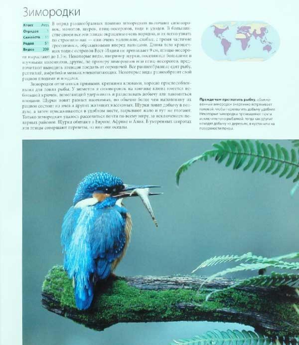 Иллюстрация 1 из 69 для Птицы - Джоанна Бургер | Лабиринт - книги. Источник: Лабиринт