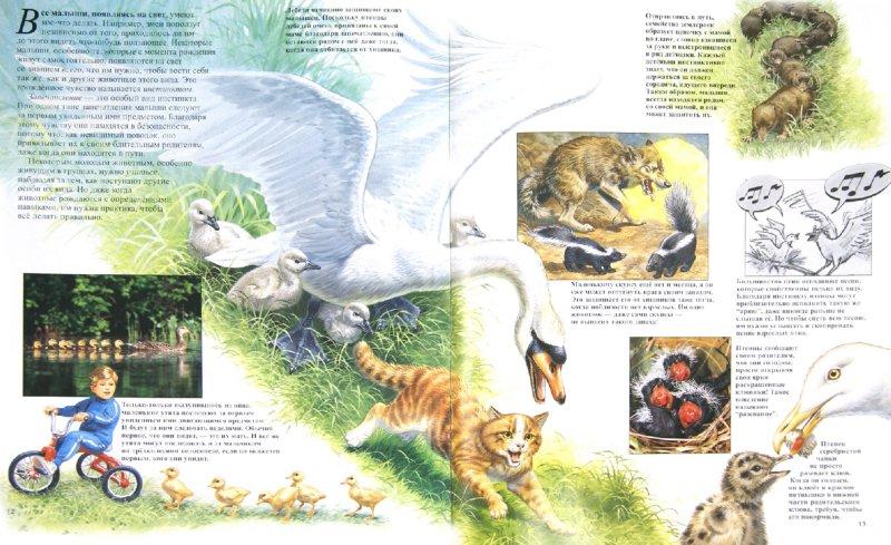 Иллюстрация 1 из 25 для Детеныши животных - Энн Элвуд | Лабиринт - книги. Источник: Лабиринт