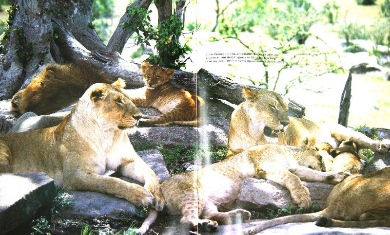 Иллюстрация 1 из 15 для Львы - Джон Веско   Лабиринт - книги. Источник: Лабиринт