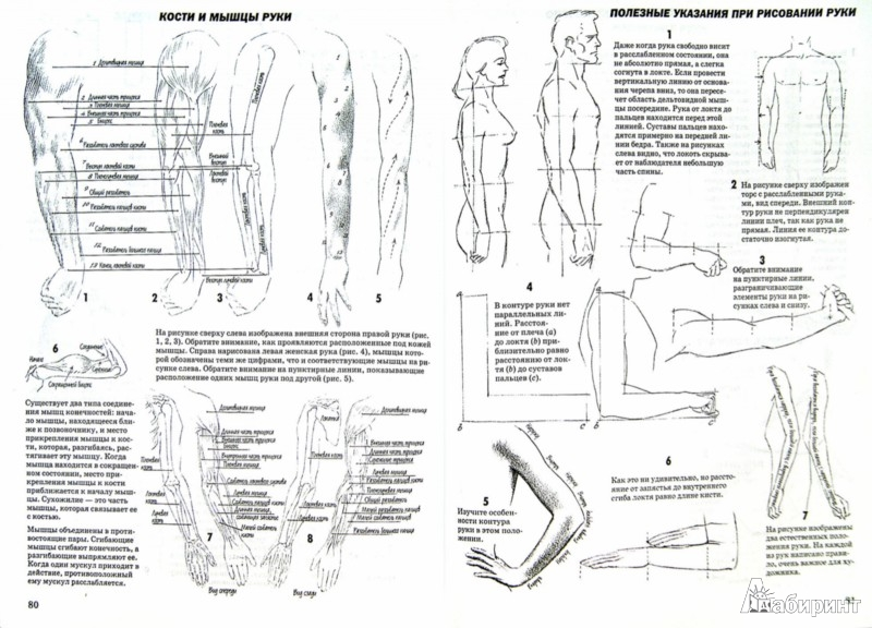 Иллюстрация 1 из 43 для Как рисовать голову и фигуру человека - Джек Хамм | Лабиринт - книги. Источник: Лабиринт