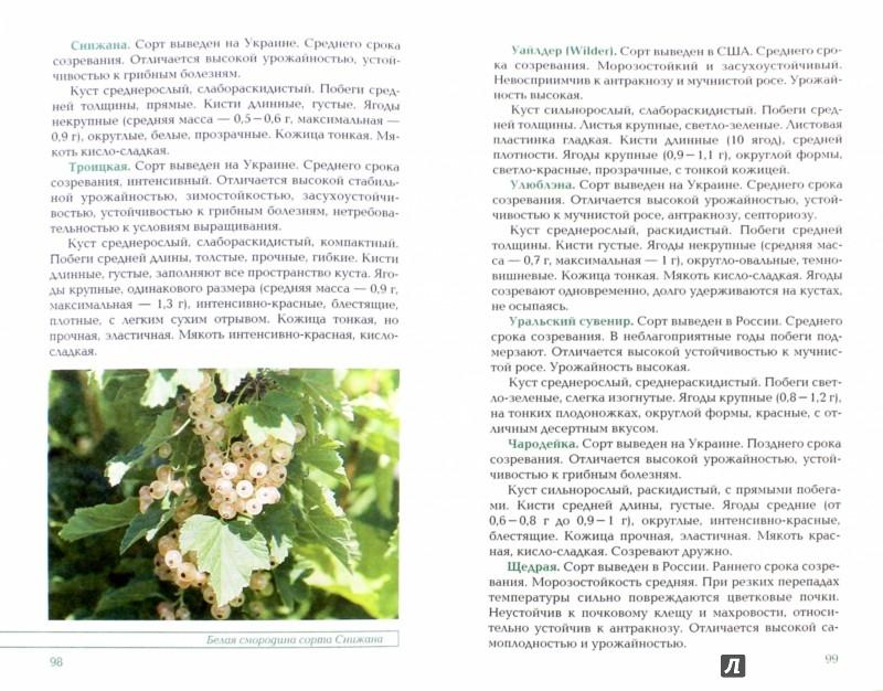 Иллюстрация 1 из 16 для Вкусные ягоды в вашем саду - Рассоха, Купличенко | Лабиринт - книги. Источник: Лабиринт