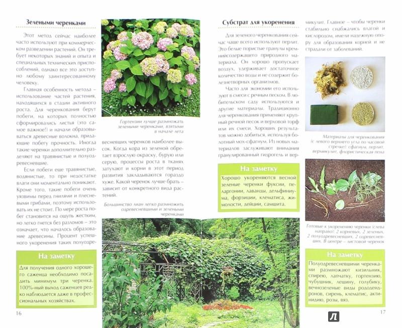 Иллюстрация 1 из 2 для Размножаем садовые растения - Антон Дубенюк | Лабиринт - книги. Источник: Лабиринт