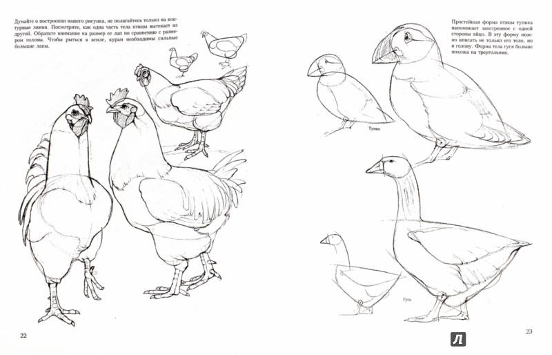 Иллюстрация 1 из 19 для Учитесь рисовать птиц - Дэвид Браун | Лабиринт - книги. Источник: Лабиринт