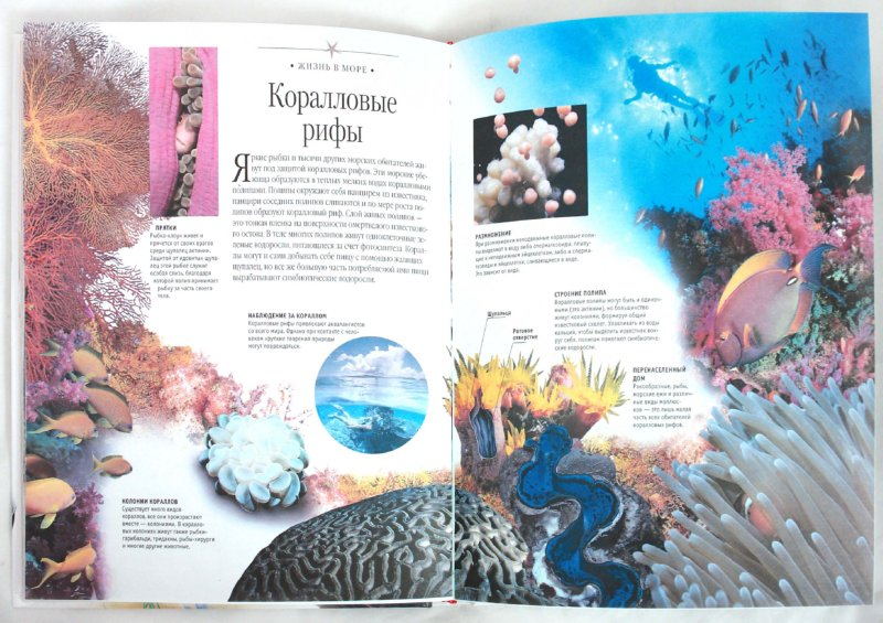 Иллюстрация 1 из 16 для Большая детская энциклопедия животных от Тины Канделаки   Лабиринт - книги. Источник: Лабиринт