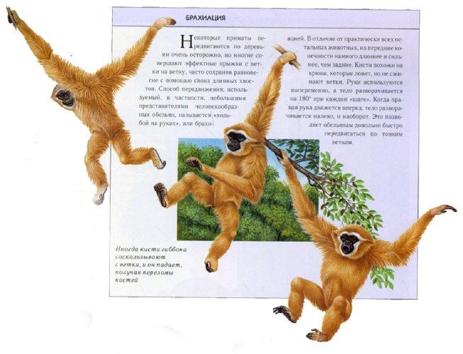 Иллюстрация 1 из 16 для Большая энциклопедия животных - Джойс Поуп | Лабиринт - книги. Источник: Лабиринт