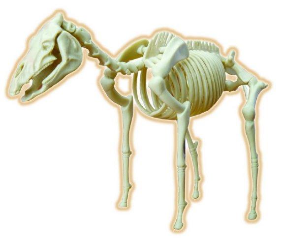 Иллюстрация 1 из 3 для Скелет лошади (28204) | Лабиринт - игрушки. Источник: Лабиринт