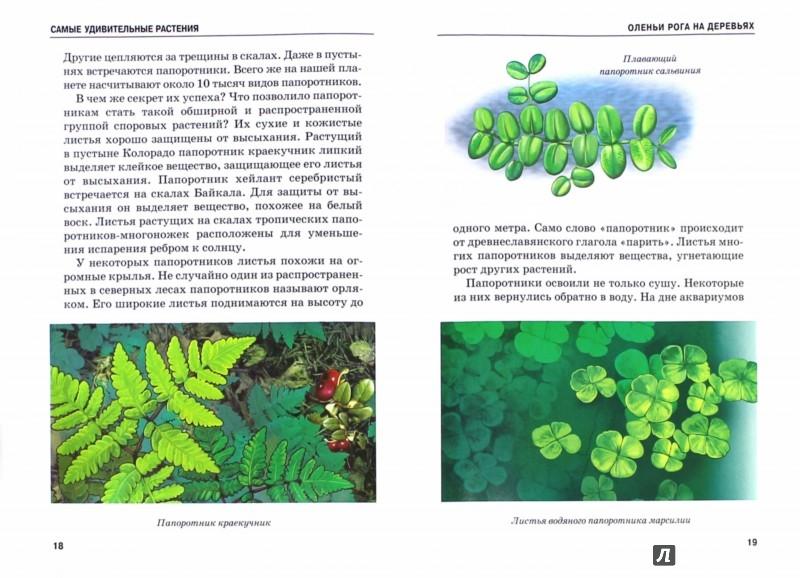 Иллюстрация 1 из 37 для Самые удивительные растения - Сергей Афонькин | Лабиринт - книги. Источник: Лабиринт