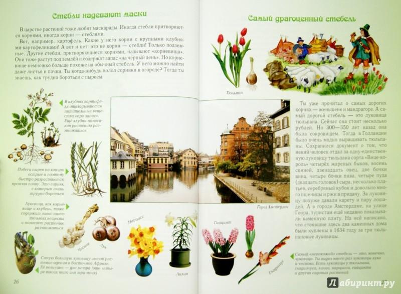 Иллюстрация 1 из 49 для Занимательная ботаника - Светлана Лаврова   Лабиринт - книги. Источник: Лабиринт