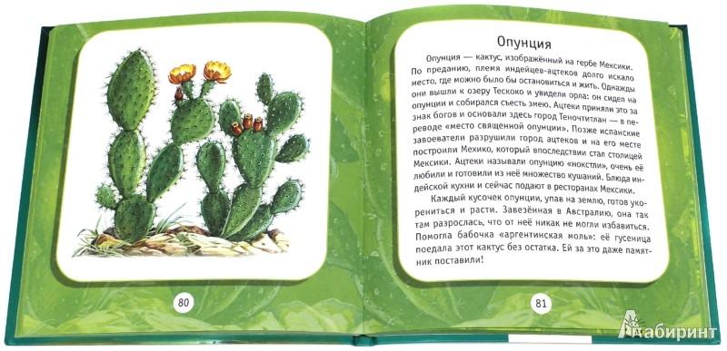 Иллюстрация 1 из 14 для Удивительные растения: Моя первая книга о природе - Инна Шустова   Лабиринт - книги. Источник: Лабиринт