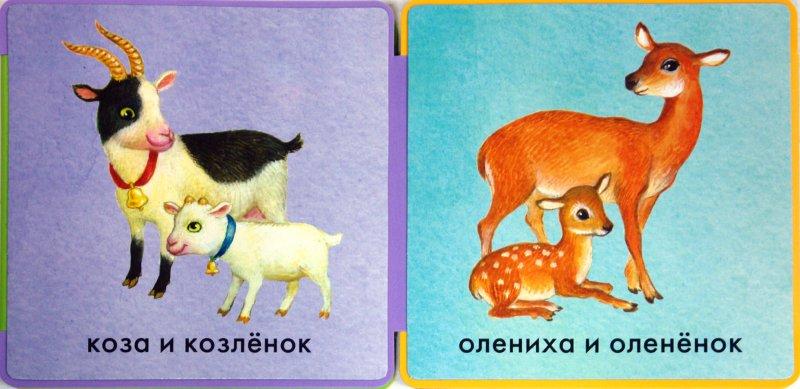 Иллюстрация 1 из 7 для Книжки-пышки-раскладушки. Мамы и малыши | Лабиринт - книги. Источник: Лабиринт