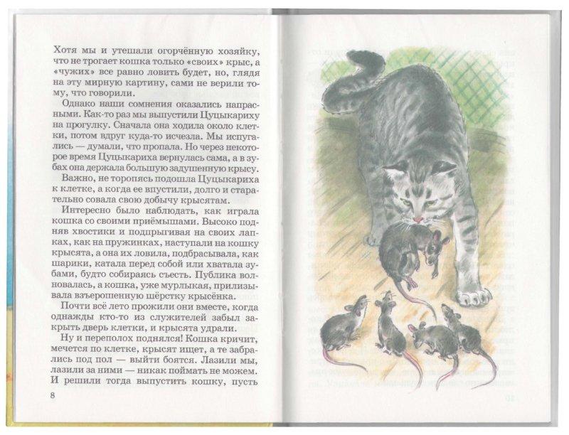 Иллюстрация 1 из 22 для Рассказы - Вера Чаплина | Лабиринт - книги. Источник: Лабиринт