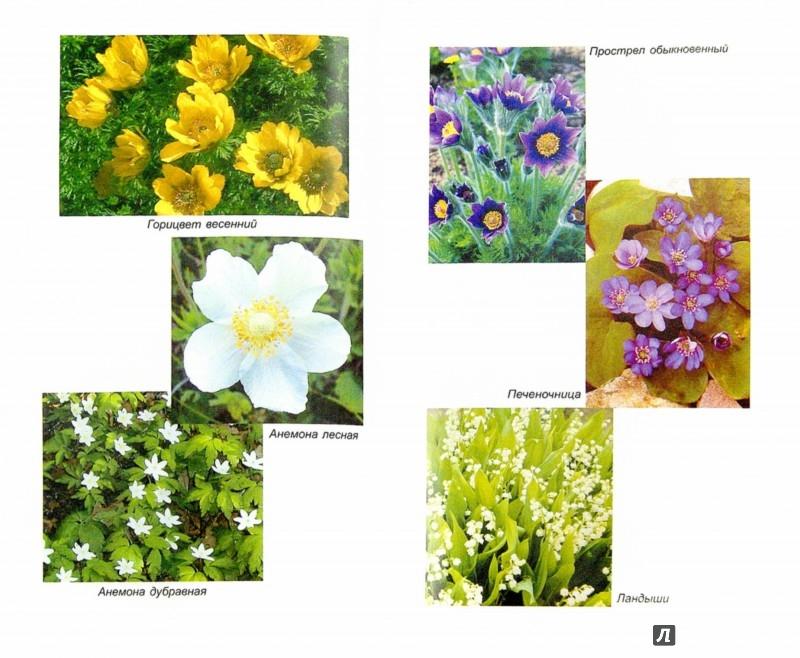 Иллюстрация 1 из 8 для Любимые весенние цветы (тюльпаны, нарциссы, гиацинты, крокусы и другие) - Алексей Карпов | Лабиринт - книги. Источник: Лабиринт