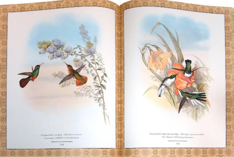 Иллюстрация 1 из 10 для Колибри - Гульд, Коблик | Лабиринт - книги. Источник: Лабиринт
