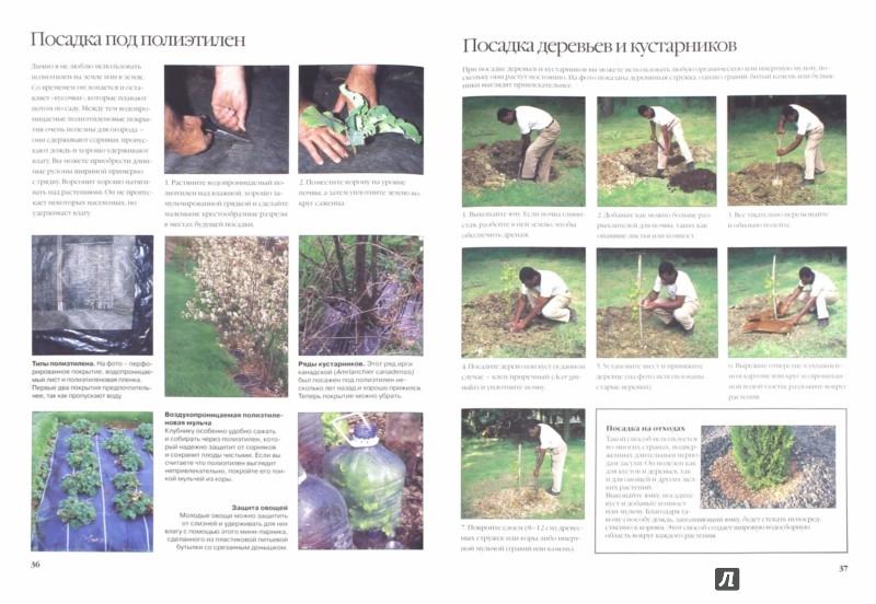 Иллюстрация 1 из 2 для Сад без воды. Практическое руководство - Шарлотта Грин | Лабиринт - книги. Источник: Лабиринт