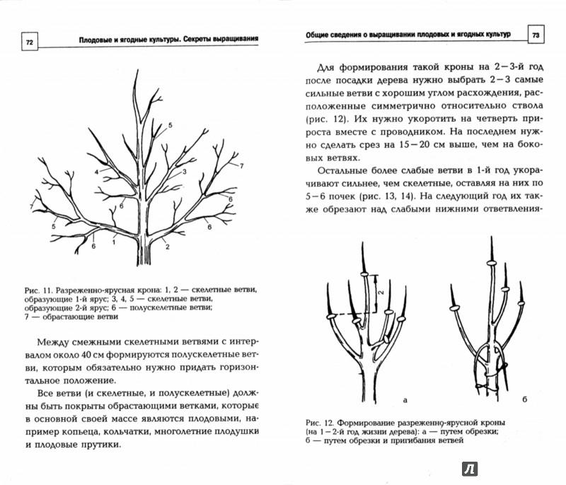 Иллюстрация 1 из 3 для Плодовые и ягодные культуры. Секреты выращивания - Доброва, Исаева   Лабиринт - книги. Источник: Лабиринт