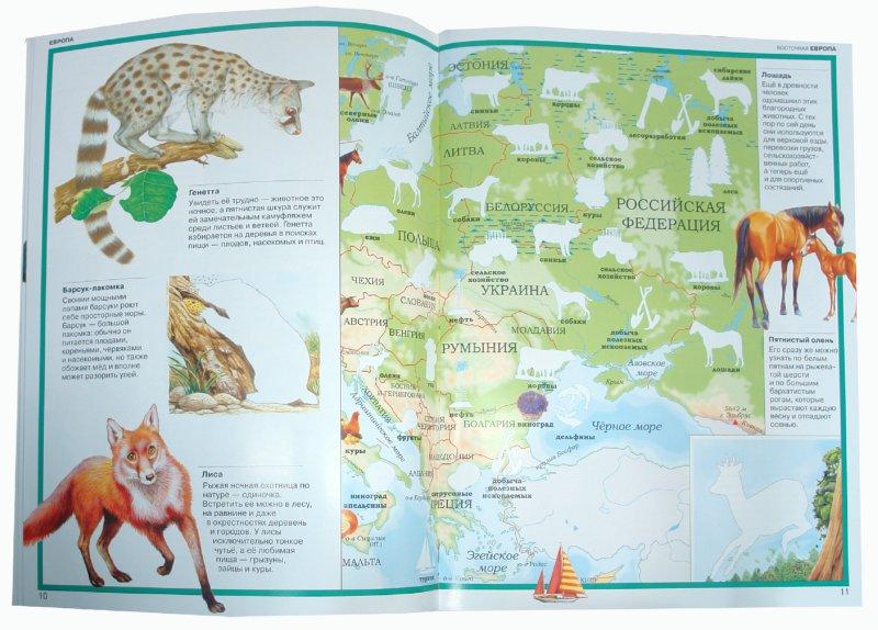 Иллюстрация 1 из 17 для Атлас. Животные всего мира | Лабиринт - книги. Источник: Лабиринт