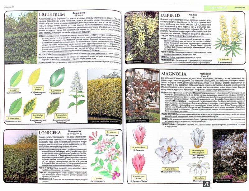Иллюстрация 1 из 21 для Все о декоративных деревьях и кустарниках - Дэвид Хессайон | Лабиринт - книги. Источник: Лабиринт