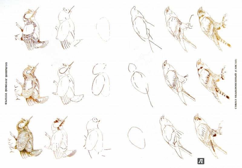 Иллюстрация 1 из 39 для Рисуем 50 исчезающих животных - Эймис, Бадд | Лабиринт - книги. Источник: Лабиринт