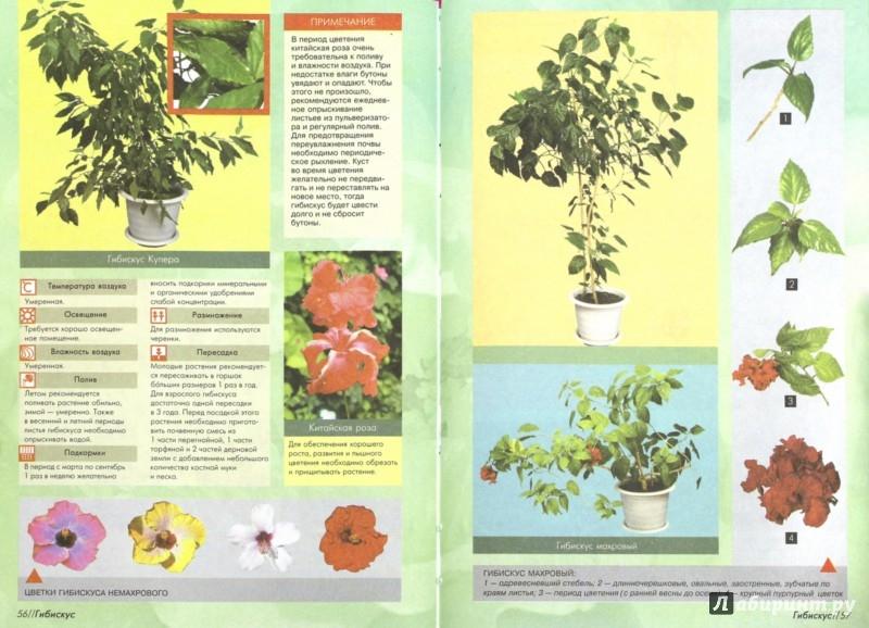 Иллюстрация 1 из 5 для 100 самых популярных комнатных растений - Ирина Иофина | Лабиринт - книги. Источник: Лабиринт