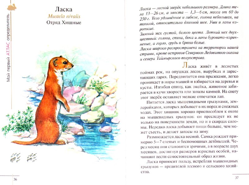 Иллюстрация 1 из 11 для Атлас: Животные леса (3610) - Бровкина, Сивоглазов | Лабиринт - книги. Источник: Лабиринт