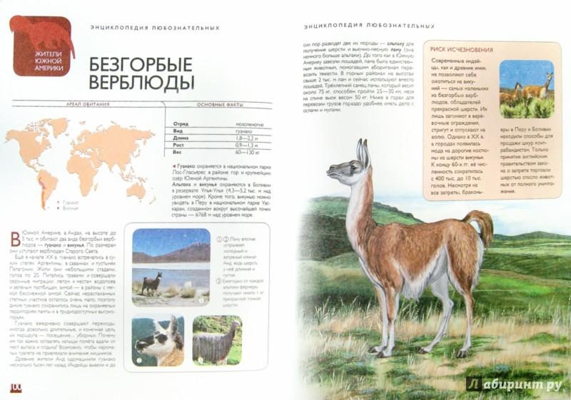 Иллюстрация 1 из 28 для Животные | Лабиринт - книги. Источник: Лабиринт