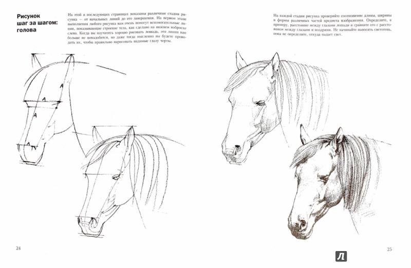 Иллюстрация 1 из 6 для Учитесь рисовать лошадей - Дэвид Браун | Лабиринт - книги. Источник: Лабиринт