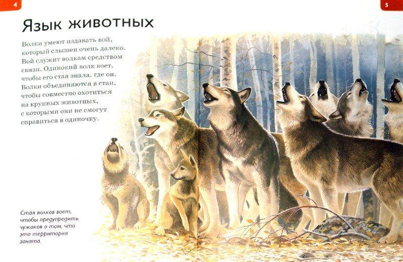 Иллюстрация 1 из 22 для Информация и связь - Кейт Макаллан | Лабиринт - книги. Источник: Лабиринт