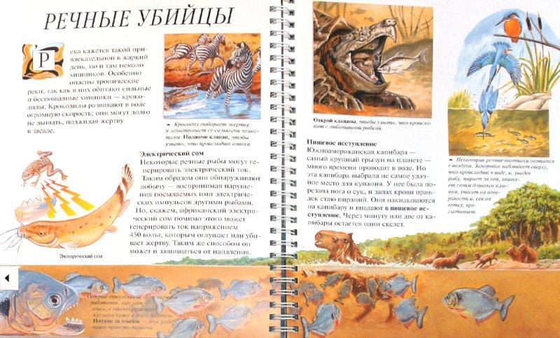 Иллюстрация 1 из 7 для Хищники - Джон Вудвард | Лабиринт - книги. Источник: Лабиринт