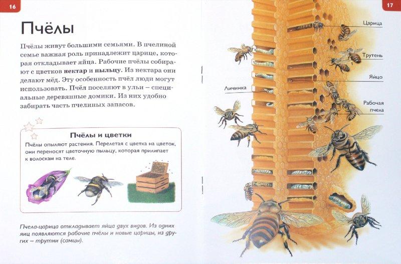 Иллюстрация 1 из 26 для Мир насекомых - Роберт Коуп   Лабиринт - книги. Источник: Лабиринт