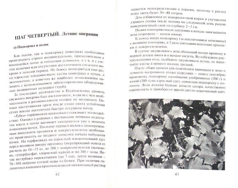 Иллюстрация 1 из 9 для 10 шагов к успеху начинающего виноградаря. Вся средняя полоса России и Урал - Виктор Жвакин | Лабиринт - книги. Источник: Лабиринт
