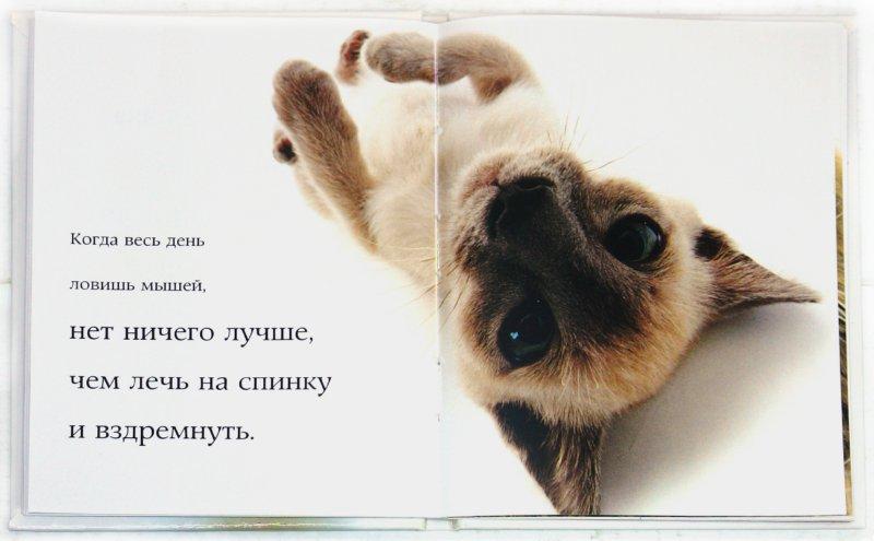 Иллюстрация 1 из 12 для Самые очаровательные кошки | Лабиринт - книги. Источник: Лабиринт
