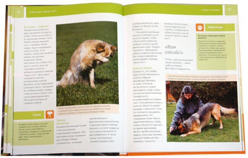 Иллюстрация 1 из 14 для Дрессируем собаку - Ангела Вегманн | Лабиринт - книги. Источник: Лабиринт