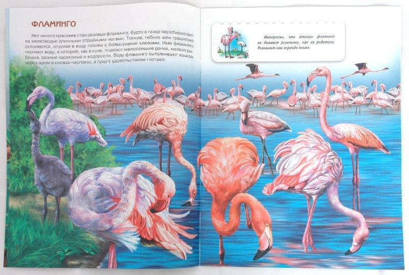 Иллюстрация 1 из 7 для Птицы. Книжки для любознательных - О. Александрова | Лабиринт - книги. Источник: Лабиринт