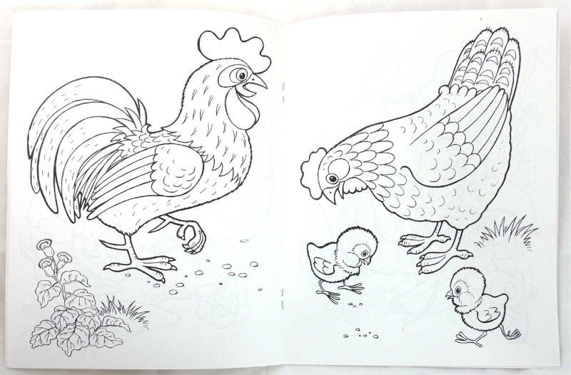 Иллюстрация 1 из 24 для Домашние любимцы - Т. Коваль | Лабиринт - книги. Источник: Лабиринт