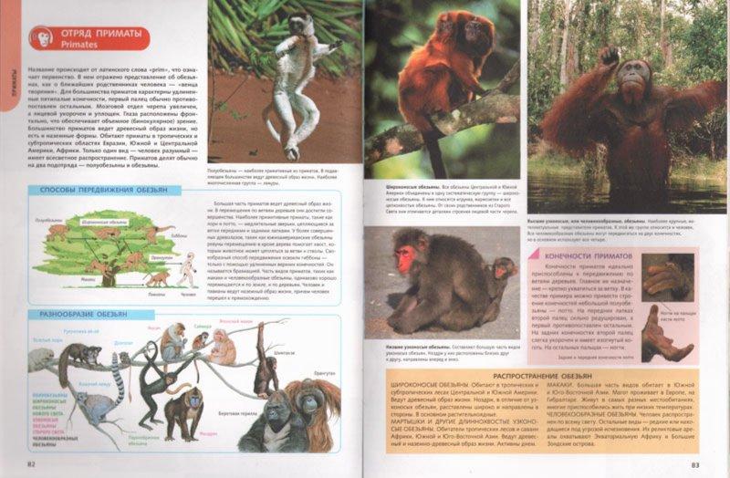 Иллюстрация 1 из 24 для 1500 самых удивительных животных. Животные всего мира от больших до маленьких | Лабиринт - книги. Источник: Лабиринт