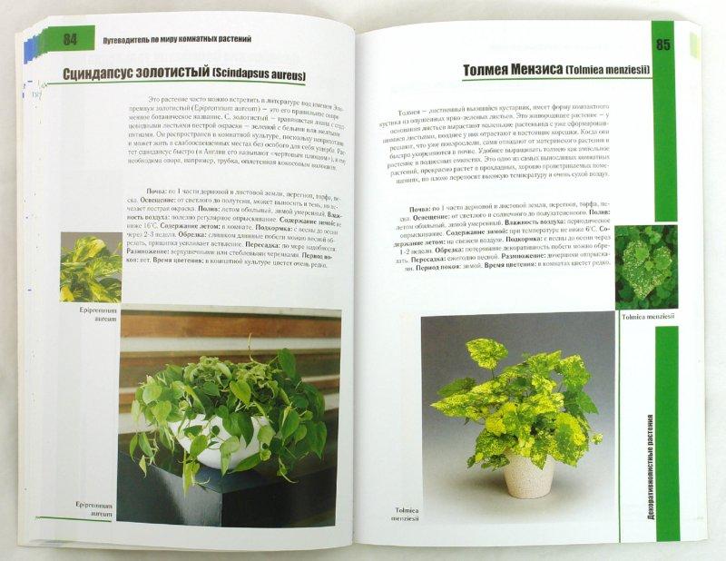 Иллюстрация 1 из 10 для Все о комнатных растениях для начинающих - Неер Ян Ван дер | Лабиринт - книги. Источник: Лабиринт
