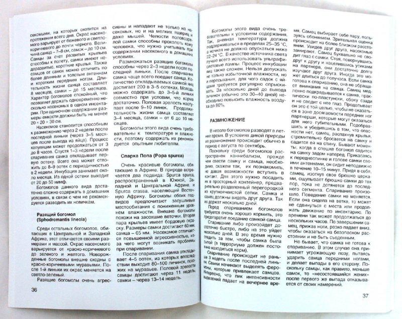 Иллюстрация 1 из 10 для Тараканы, богомолы, палочники. Уход и содержание - Ольга Перепелова | Лабиринт - книги. Источник: Лабиринт