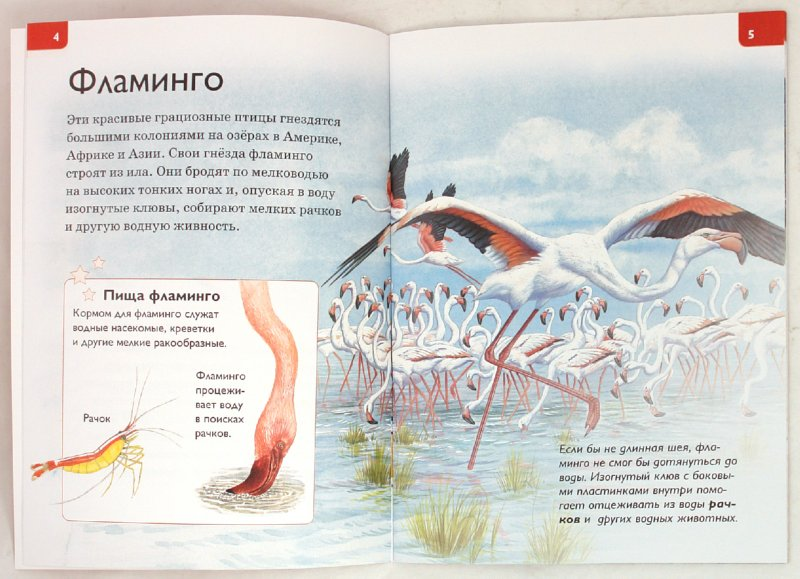 Иллюстрация 1 из 22 для В мире животных - Роберт Коуп   Лабиринт - книги. Источник: Лабиринт