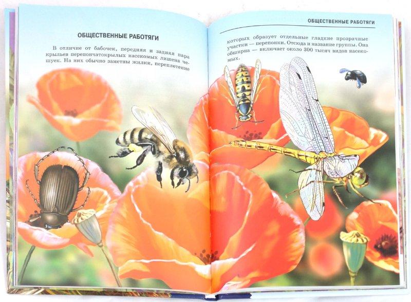Иллюстрация 1 из 38 для Жуки и другие удивительные насекомые - Сергей Афонькин | Лабиринт - книги. Источник: Лабиринт