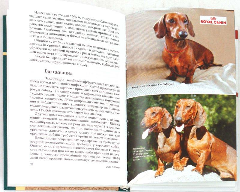 Иллюстрация 1 из 10 для Такса - Наталия Ришина   Лабиринт - книги. Источник: Лабиринт