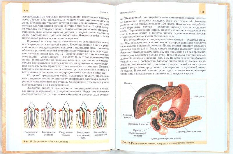 Иллюстрация 1 из 12 для Биология. Человек. 8 класс. Учебник - Батуев, Кузьмина, Ноздрачев, Орлов, Сергеев | Лабиринт - книги. Источник: Лабиринт