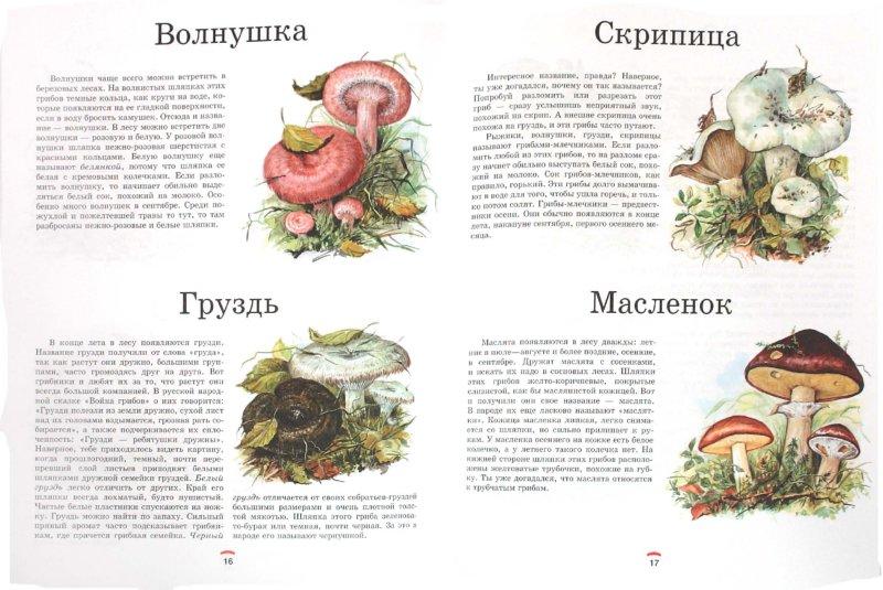 Иллюстрация 1 из 36 для Царство грибов: книга для чтения детям - Лидия Гарибова | Лабиринт - книги. Источник: Лабиринт